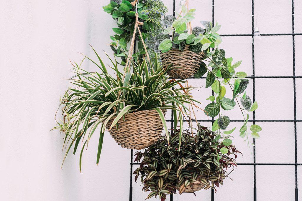 wiszące rośliny pielęgnacja