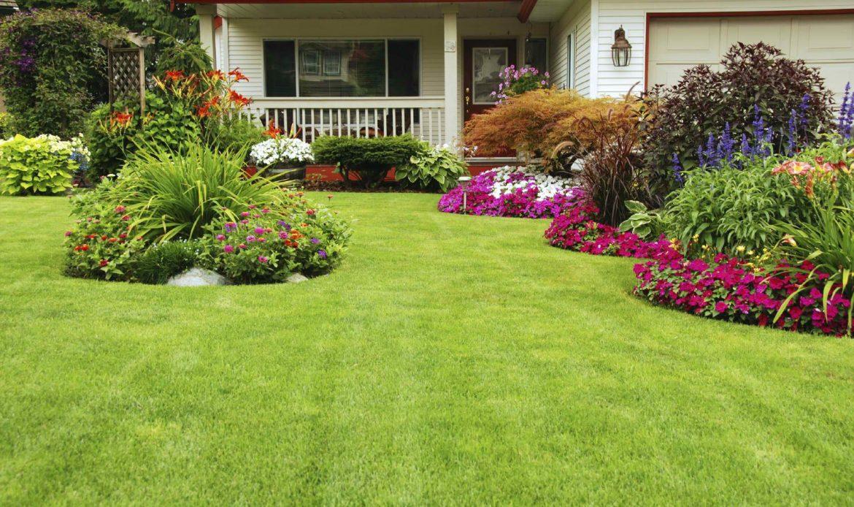 trawa gazonowa w ogrodzie