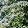 Toksyczne i niebezpieczne rośliny