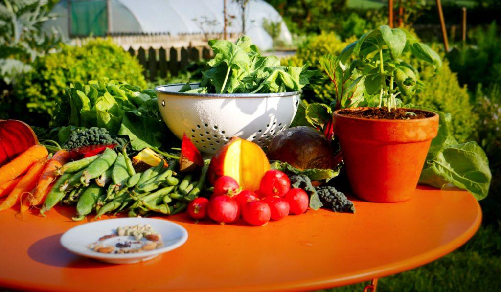 Uprawa warzyw w domu