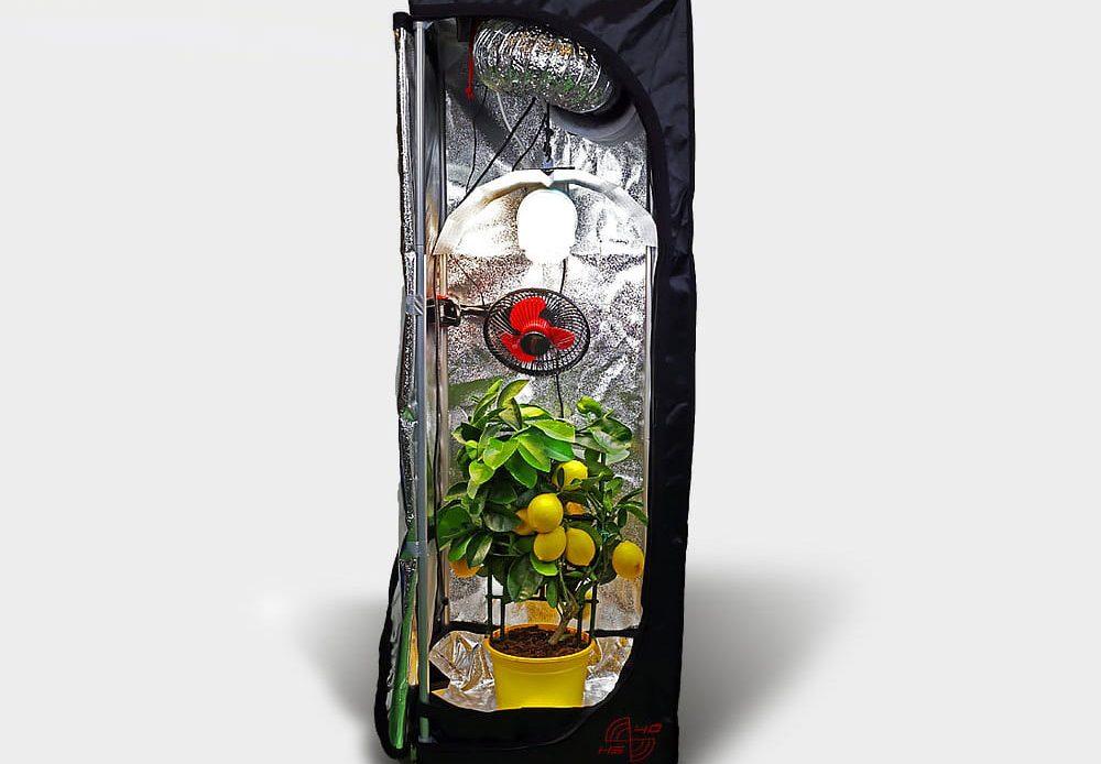 Growbox dla początkujących