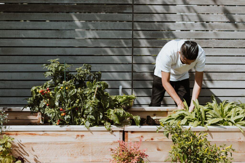 usługi projektanta ogrodów
